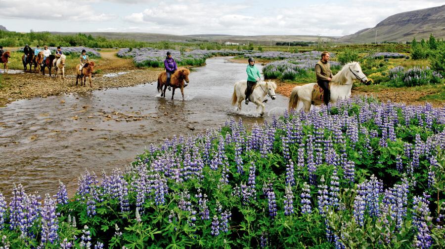 Horseback riding Iceland