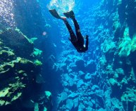 Freedive Silfra Iceland
